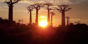 Sunset at the Baobab alley